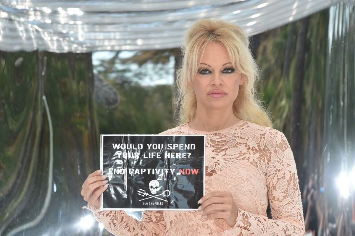 Pamela Anderson photo #719470
